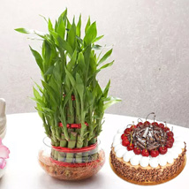 3 Layer Bamboo With Black Forest Cake:
