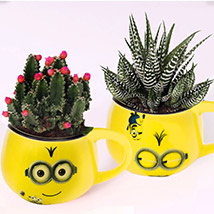 Cactus and Haworthia In Smiley Pots: Cactus and Succulents Plants