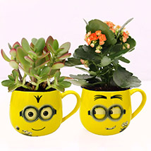 Crassula and Kalanchoe Plants in Emoticon Mugs: Best Flowering Plants