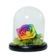 Splendid Rainbow Rose: Ramadan Flowers