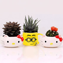 Succulents In Cute Ceramic Pots: Succulent Plants