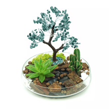 Potted Succulent & Cactus Under A Wishing Tree: Wish Trees